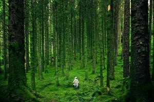 Frisian nature